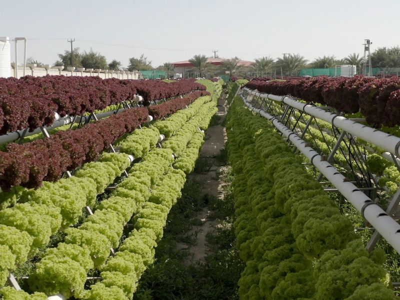 NAT UAE modern farming 01-1592635716008