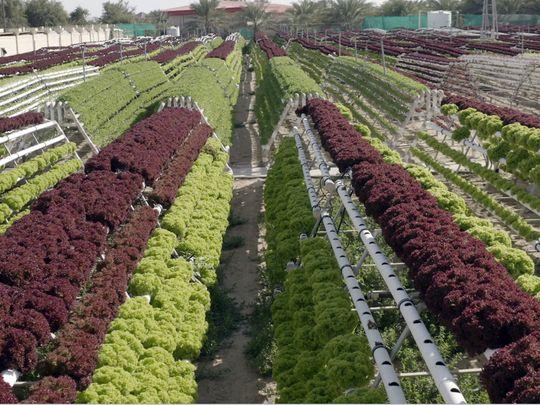NAT UAE modern farming 02-1592635718452