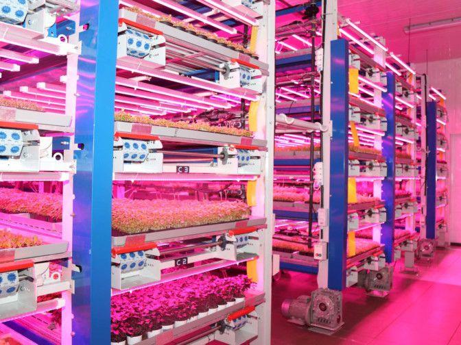 NAT Vertical farm-1592635720387