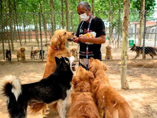 NGO No Dogs Left Behind China NGO shelter