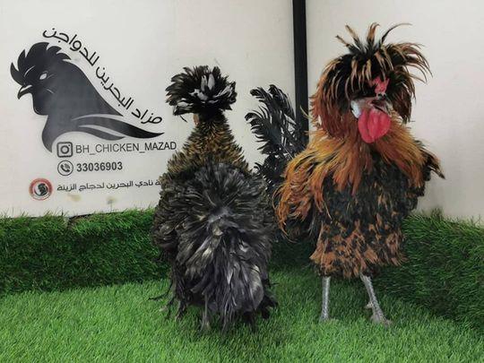 REG 200628 chicken-1593428620876