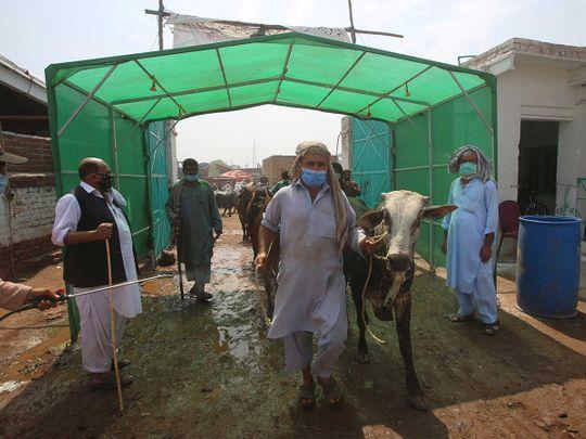 Pakistan cattle vendors Eid market  disinfectant tunnel
