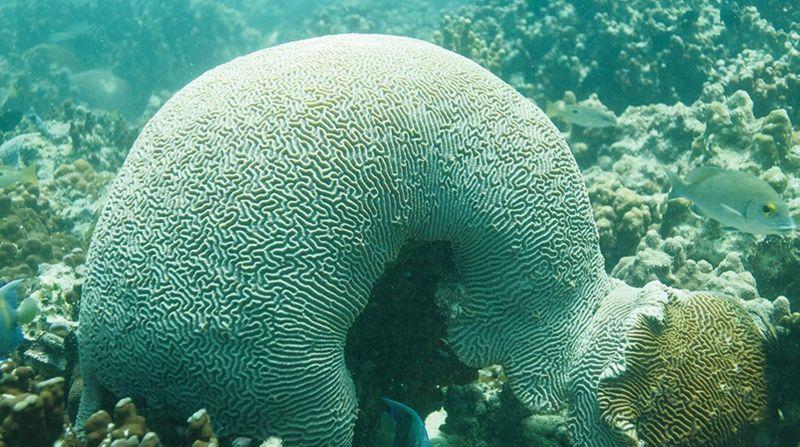 Coral reef in Abu Dhabi