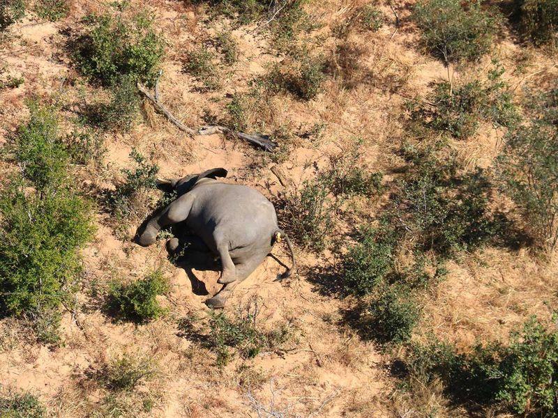 20200703 botswana elephants
