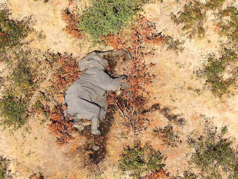 20200703 elephants dead