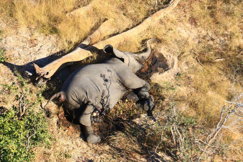 Copy of Botswana_Dead_Elephants_01552.jpg-8d9a6-1593779420648