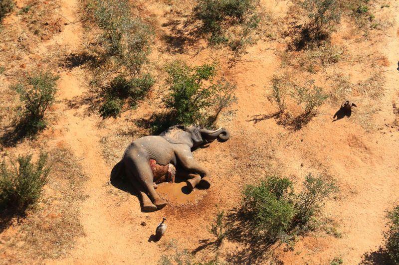 Copy of Botswana_Dead_Elephants_43507.jpg-07349-1593779417180