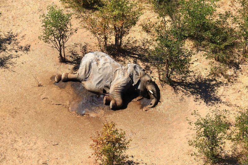 Copy of Botswana_Dead_Elephants_80042.jpg-83647-1593779414589