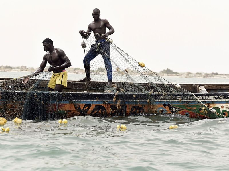 Sea turtles find protection from Senegal fishermen
