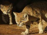 WAM SAND CAT8-1593875617258