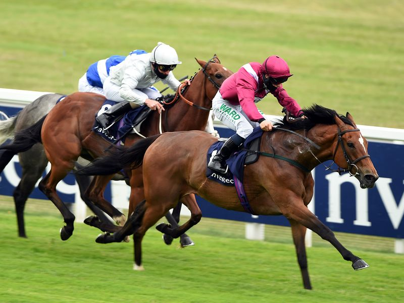 Race 2, Investec Surrey Stakes (Listed, 7f) - The favourite Safe Voyage wins the Surrey Stakes in track record time to gift trainer John Quinn with a memorable 1,000th winner. Former champion jockey Silvestre De Sousa chose to make all at a fast pace and the winner proved a willing partner.