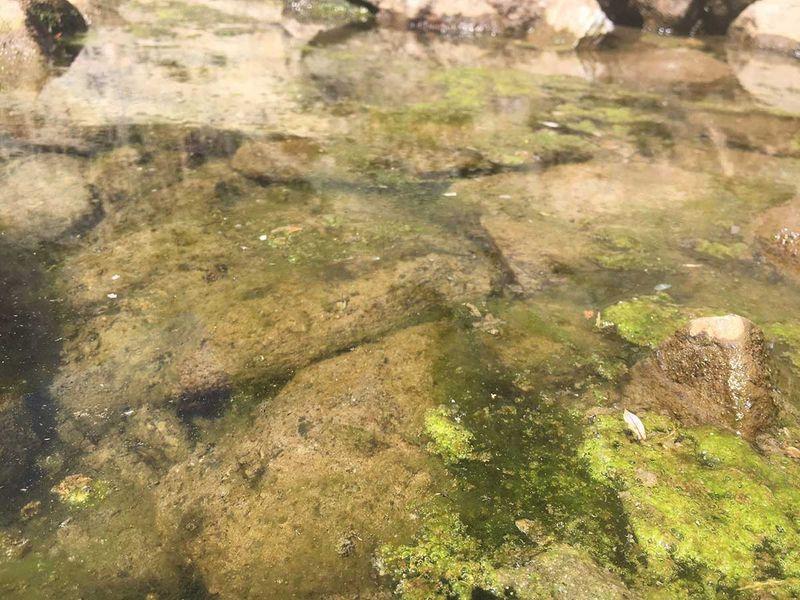 20200708 algae green