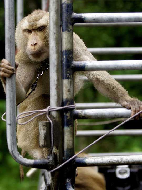 20200907 monkey slaves