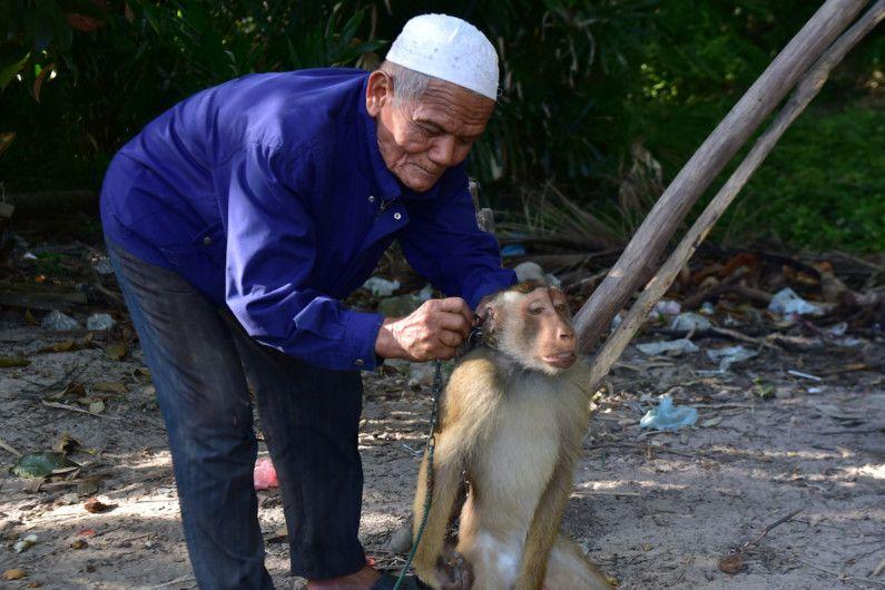 Copy of web 200709 macaque monkey 0-1594283366456