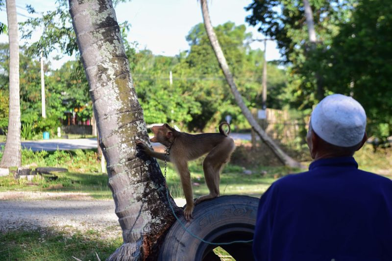 Copy of web 200709 macaque monkey 1-1594283369131