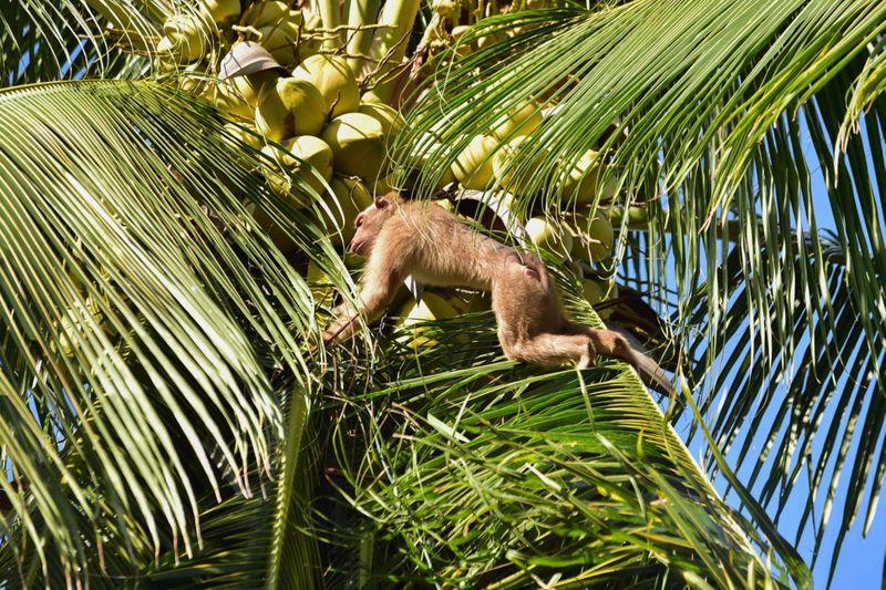 Copy of web 200709 macaque monkey-1594283364376