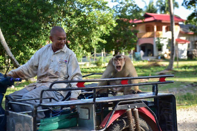 Copy of web 200709 macaque monkey 7-1594283385401