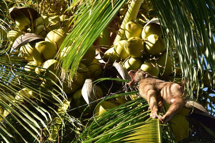 Copy of web 200709 macaque monkey 8-1594283387503