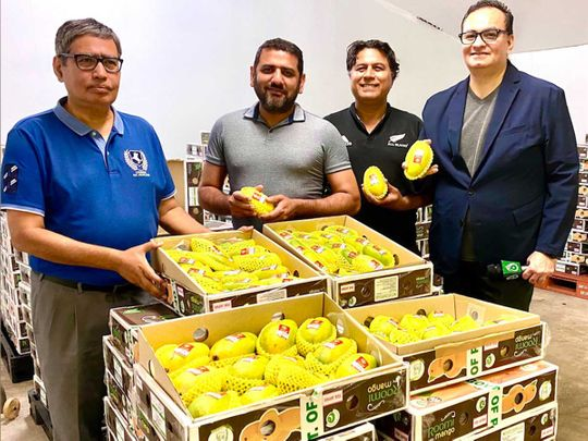 Pakistan export Japan mangoes