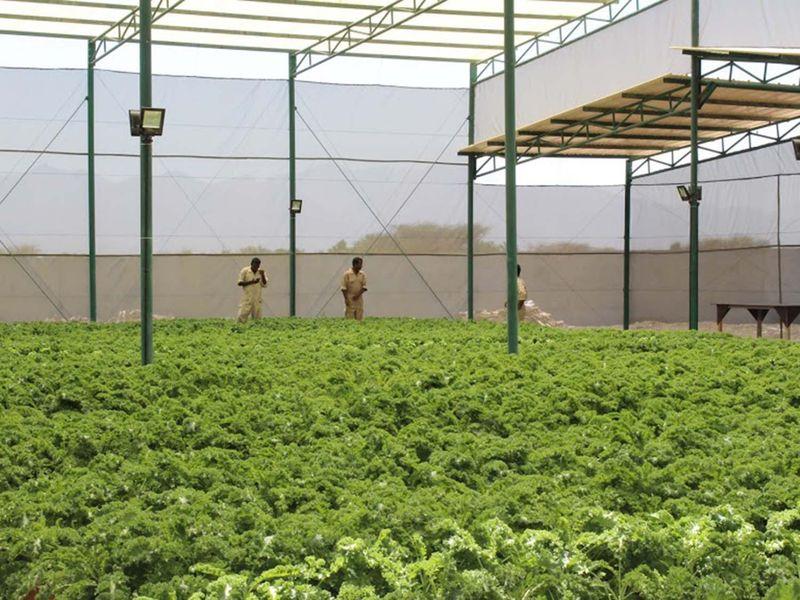 REG 200712 Aquaponics farm 74-1594642674457