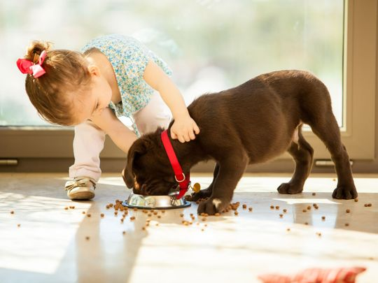 Children with dogs have better social and emotional development