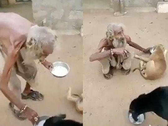Elderly beggar helps dogs