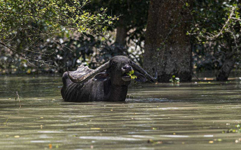 Copy of India_Floods_49323.jpg-0f7a7~1-1595134715795