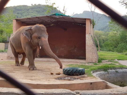 WPK 200719 Kaavan the elephant at Islamabad Zoo-1595147101816