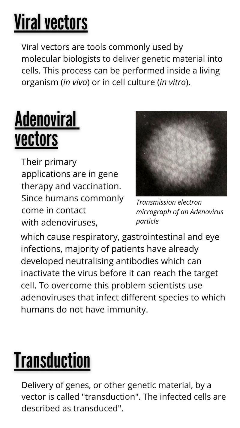 Viral vectors