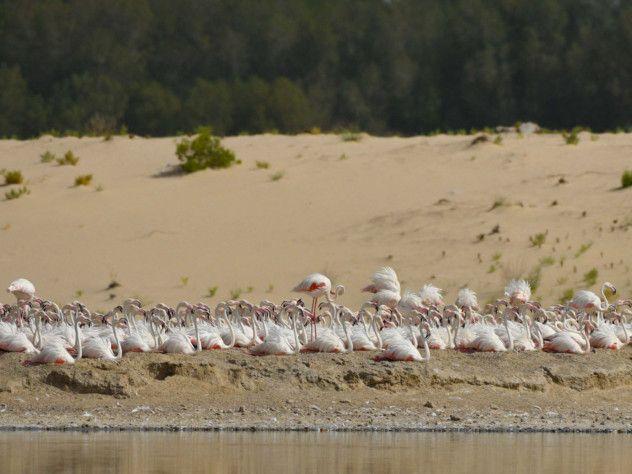 NAT 200722 Flamingos1-1595415750932