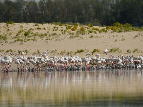 NAT 200722 Flamingos12-1595415752800