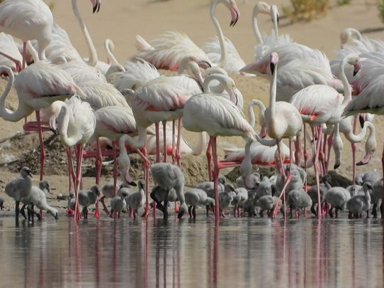 NAT 200722 Flamingos144-1595415754857