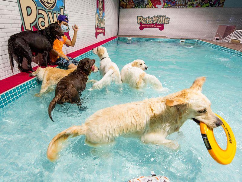 Dog park gallery