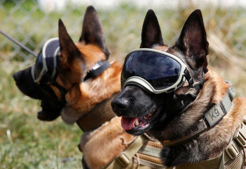 Copy of 2020-07-24T135135Z_399081941_RC2PZH9TOQZA_RTRMADP_3_HEALTH-CORONAVIRUS-GERMANY-DOGS-1595653901873