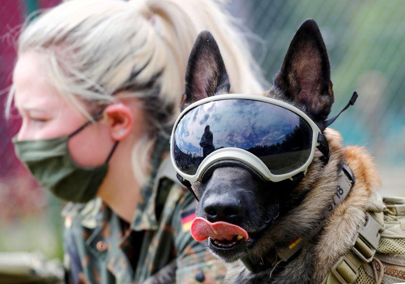 Copy of 2020-07-24T140249Z_1917546085_RC2OZH97BSTI_RTRMADP_3_HEALTH-CORONAVIRUS-GERMANY-DOGS-1595653895816