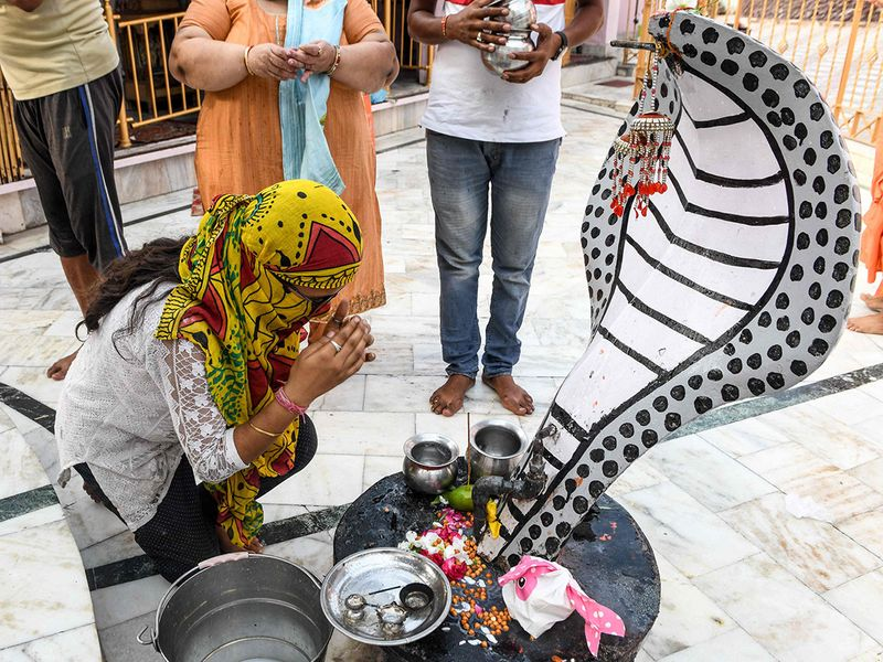 on the occasion of Naga Panchami for the traditional worship of snakes