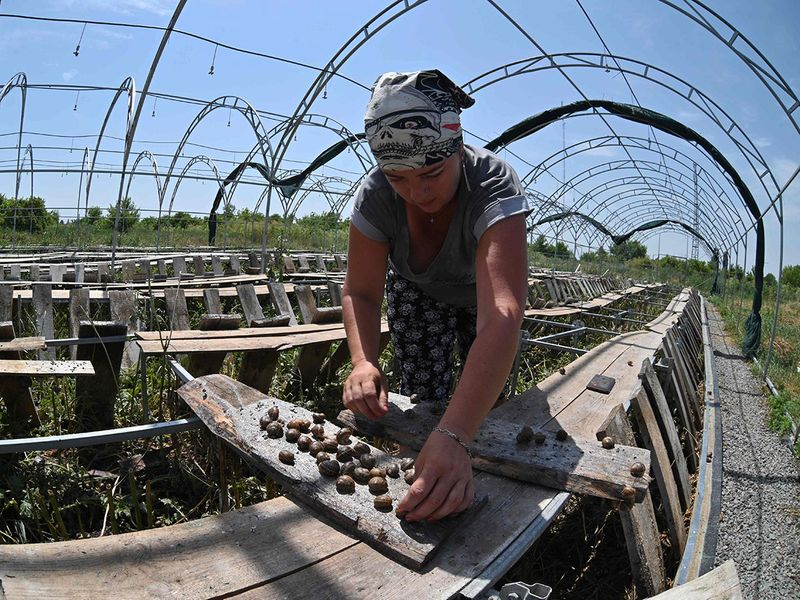 Ukraine's snail farmers