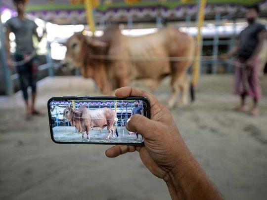 Cattle vendor online Dhaka