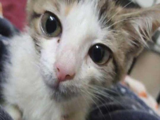 Kitten raped in Lahore