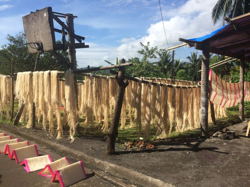 Drying of abaca fibers
