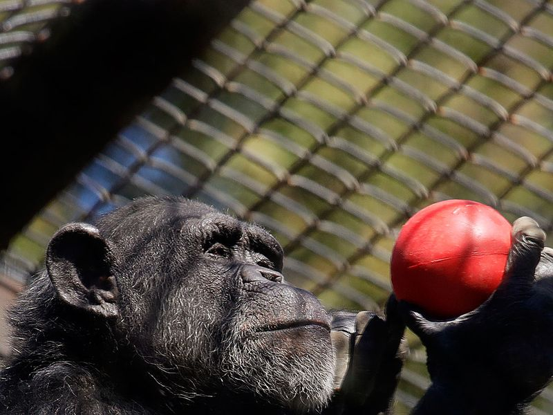 Struggling zoos
