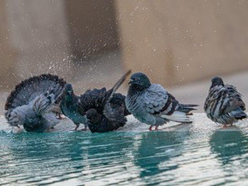 reader picture birds