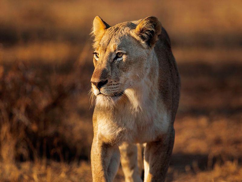south africa safari gallery