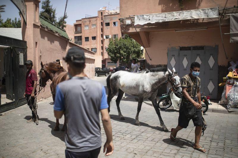 Copy of Virus_Outbreak_Morocco_Tourist_Animals_21249.jpg-77168~1-1597027285878