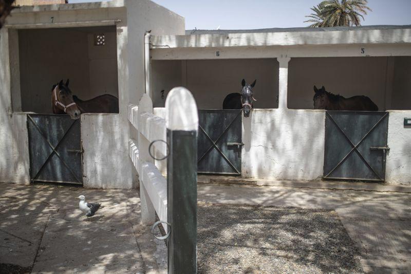 Copy of Virus_Outbreak_Morocco_Tourist_Animals_93761.jpg-bfdf7~1-1597027298489