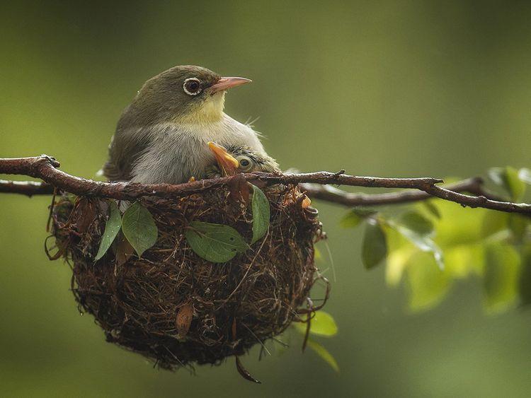 REG 200810 OMAN h bird-1597053369906