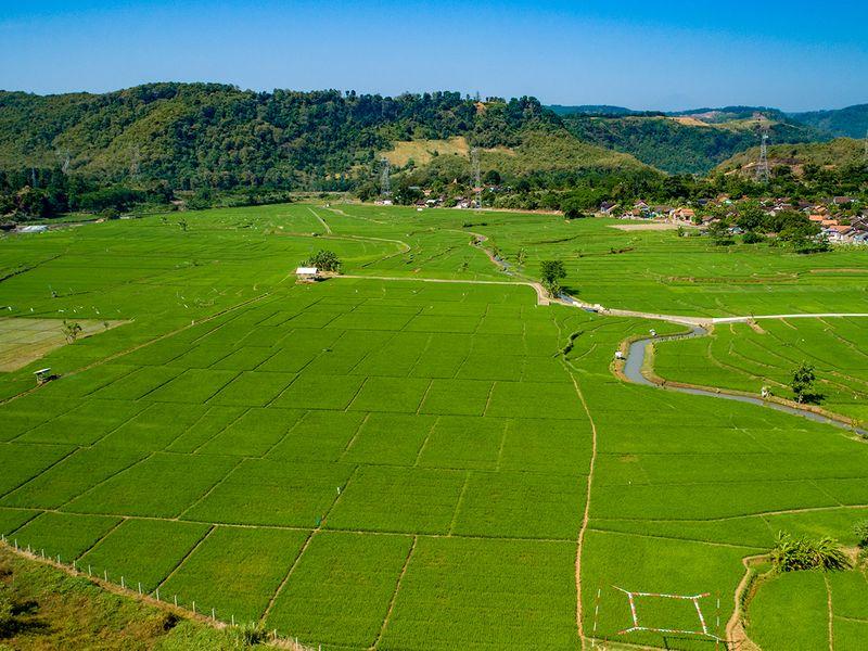 Batang fields