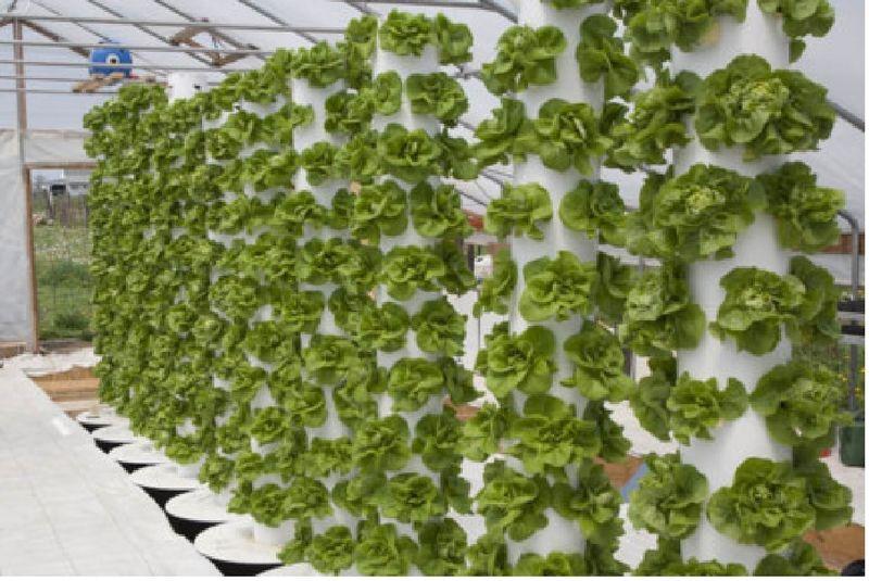 Vertical farming lettuce wall