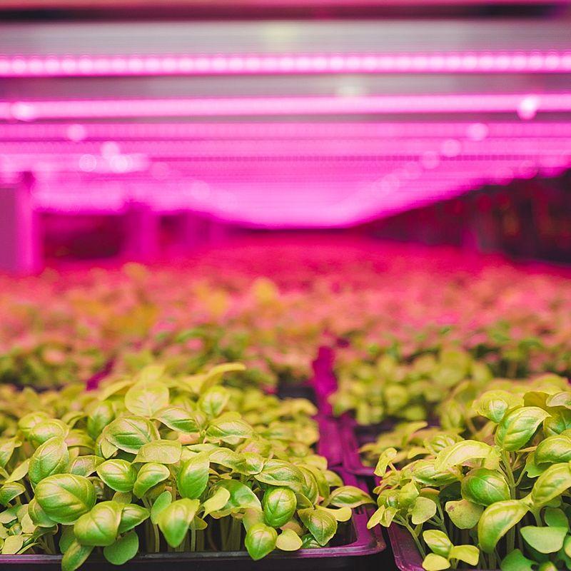 verfical farm INDOOR GARDEN  Al Badia Farms vertical farm facility in Dubai's Al Quoz district.