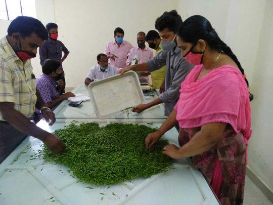 Kerala chilli kanthari